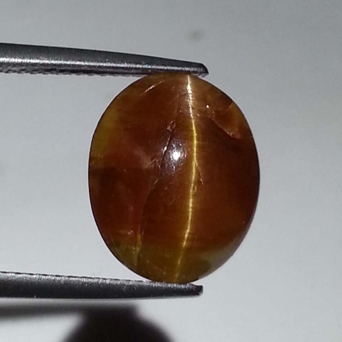 7.16 ct Top Quality Glowing Honey Natural Apatite cat's