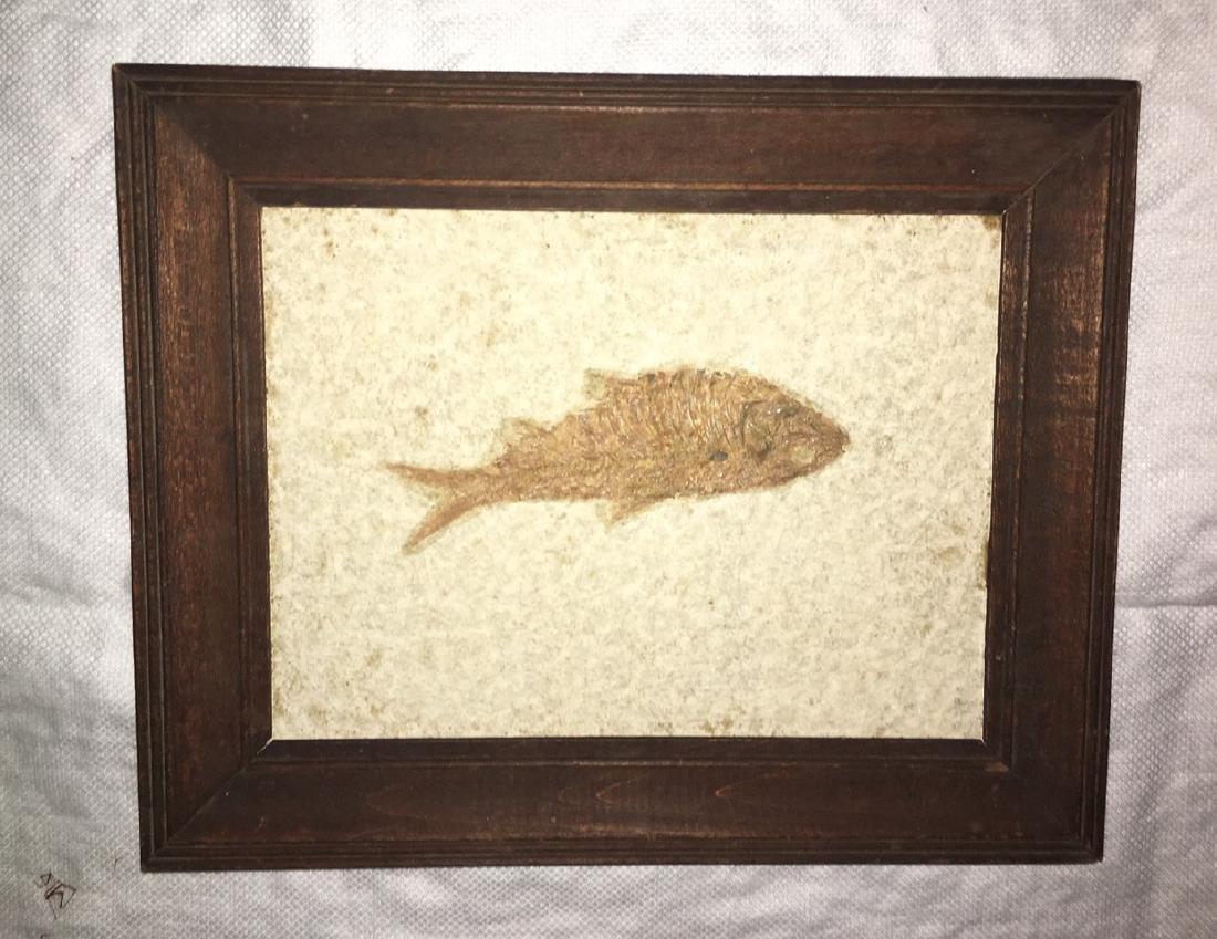 Fish Fossil in Limestone