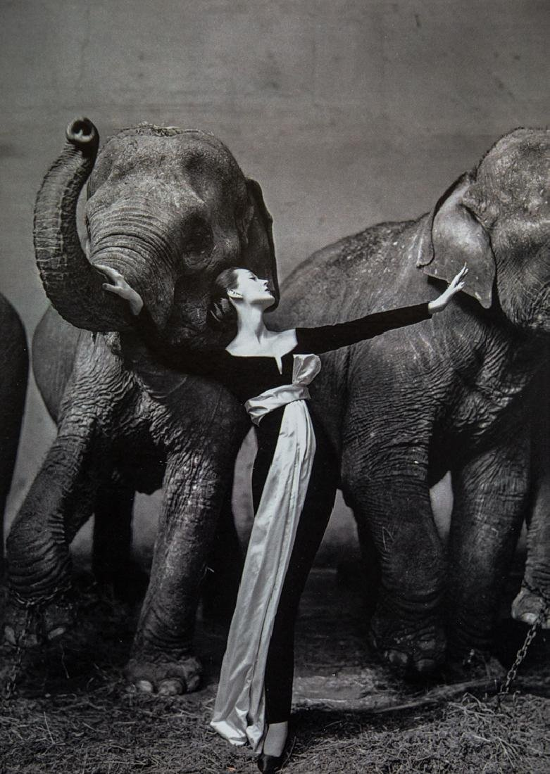 RICHARD AVEDON - Dovima and the Elephants, 1955