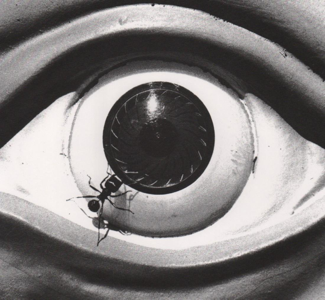 DAVID  WOJNAROWICZ -  Untitled from the Ant Series