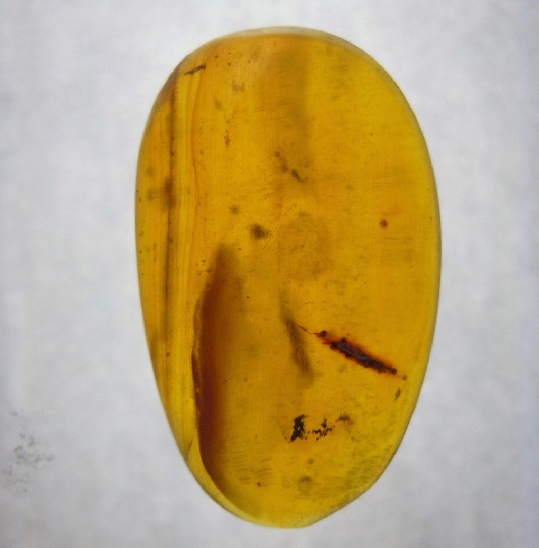 100 MILL YEARS OLD BURMITE AMBER
