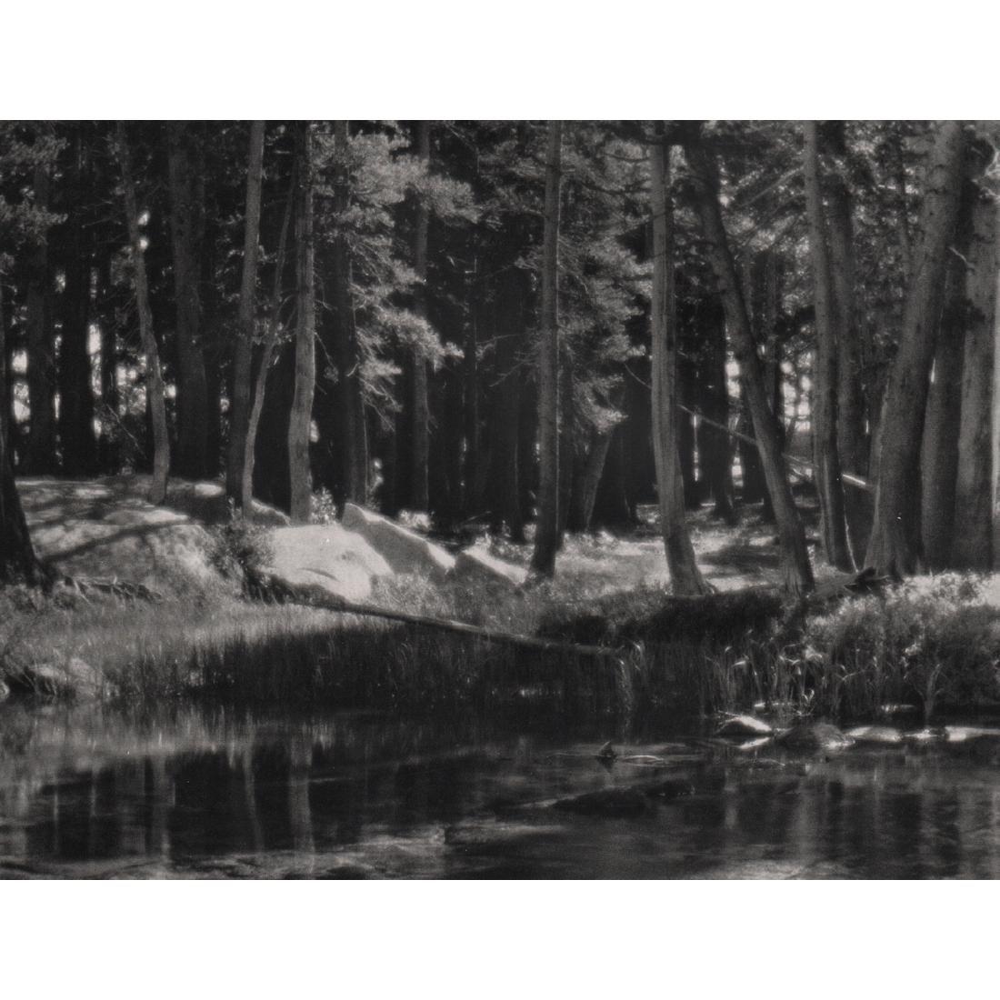ANSEL ADAMS - Grove, Lyell Fork of the Merced River,