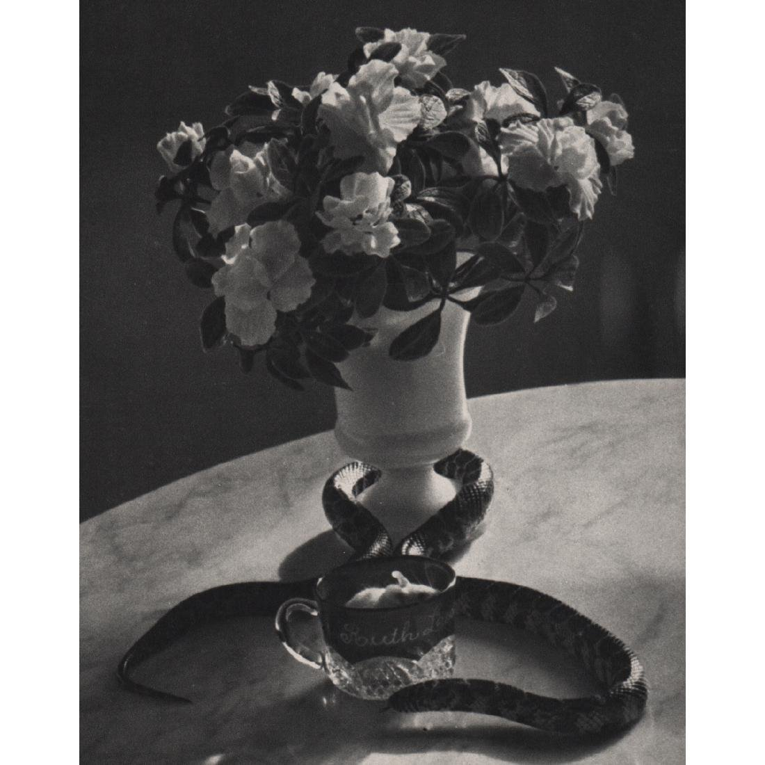 ANDRE KERTESZ - Still Life with Snake, 1960