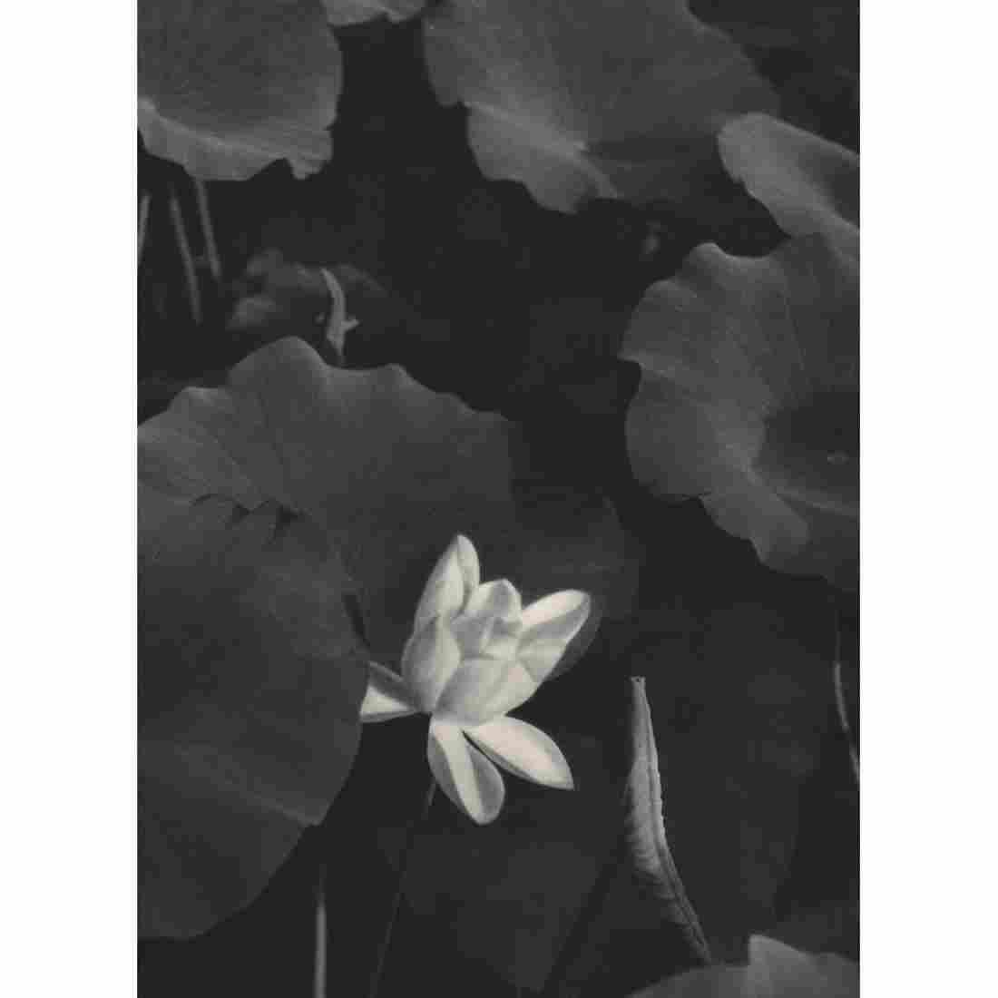 HELENE HOPPENOT - Lotus Flower