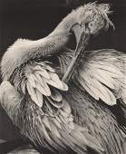 WOLFGANG SUSCHITZKY -  Pelican