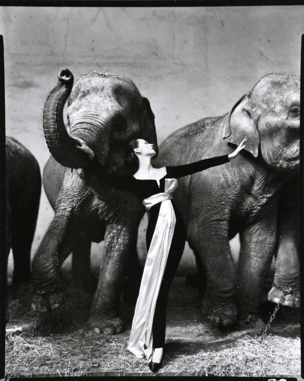 RICHARD AVEDON - Dovima with elephants, Paris, 1955