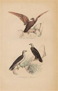 Hand colored Larks Buffon 1853
