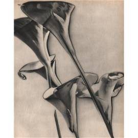 MAN RAY -  Calle Lilies