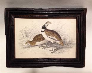 1836 Hand Colored Bustard Engraving