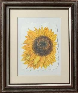 Jane Wilson Sunflower