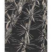 FRED G. KORTH - Cactus