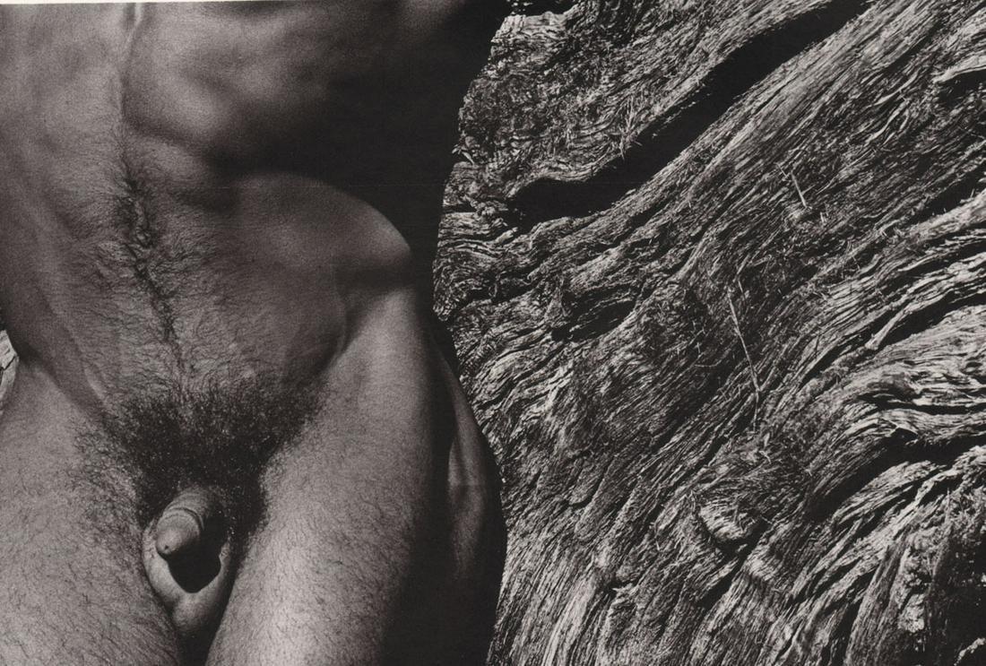 EVA RUBINSTEIN -  Torso and Bark,1974