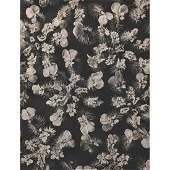 KARL BLOSSFELDT - Caucalis latifolia