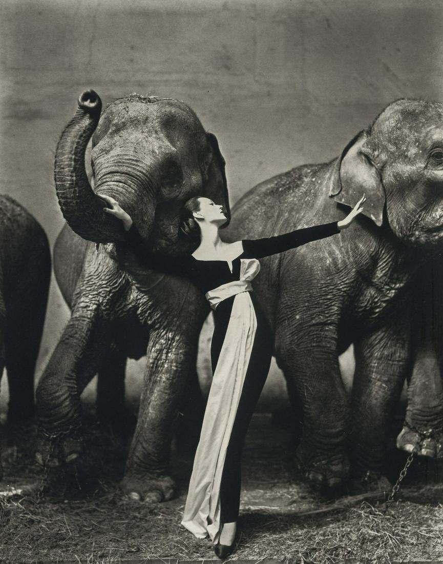 Richard Avedon, Dovima with Elephants, 1955