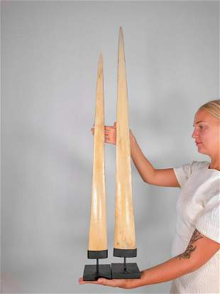 Fine Pair of Swordfish Tusks (Xiphias Gladius) with