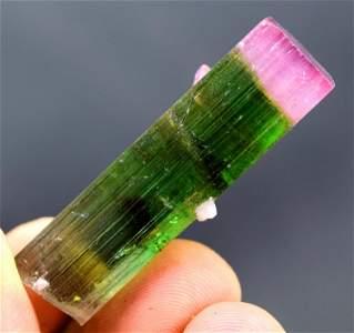 Tourmaline Crystal , Terminated And Undamaged Bi-color