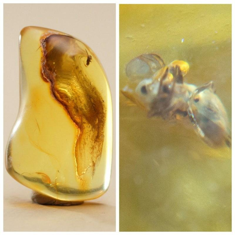 7.3 gram natural Baltic amber stone with insect,