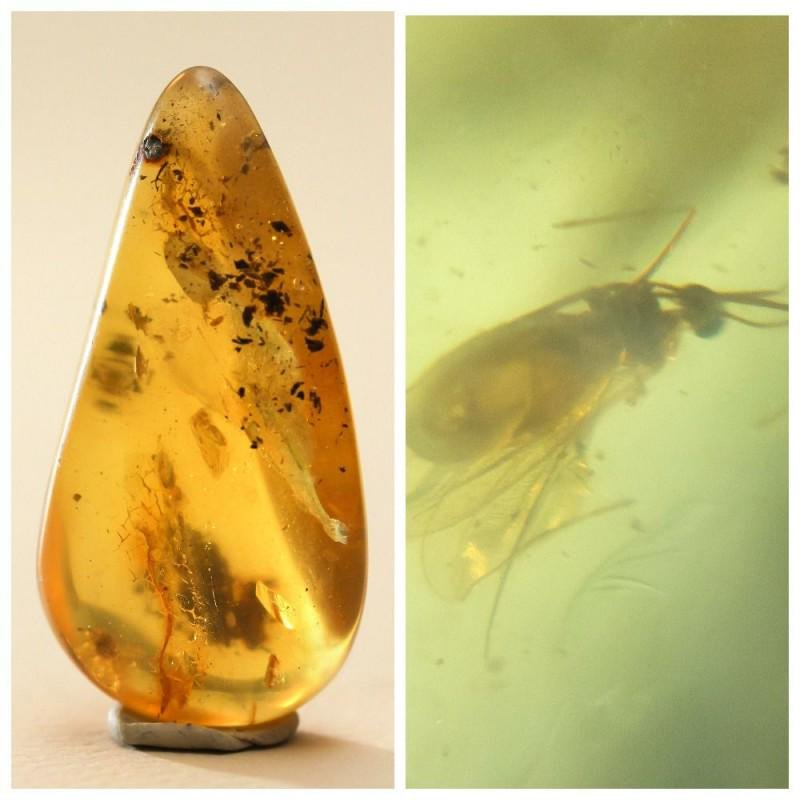 Amber stone with insect, inclusion some rare fly
