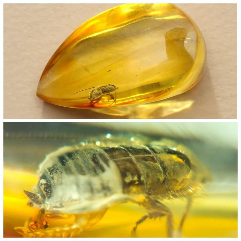 Gem stone with insect, inclusion faceted natural Baltic