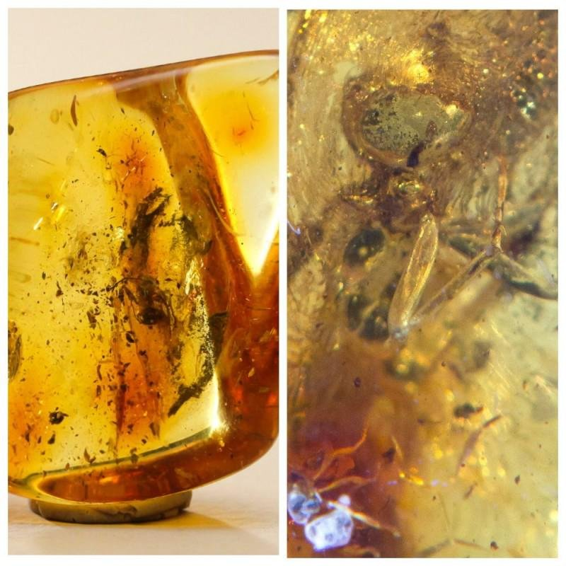 100% natural Baltic amber stone with insect, inclusion