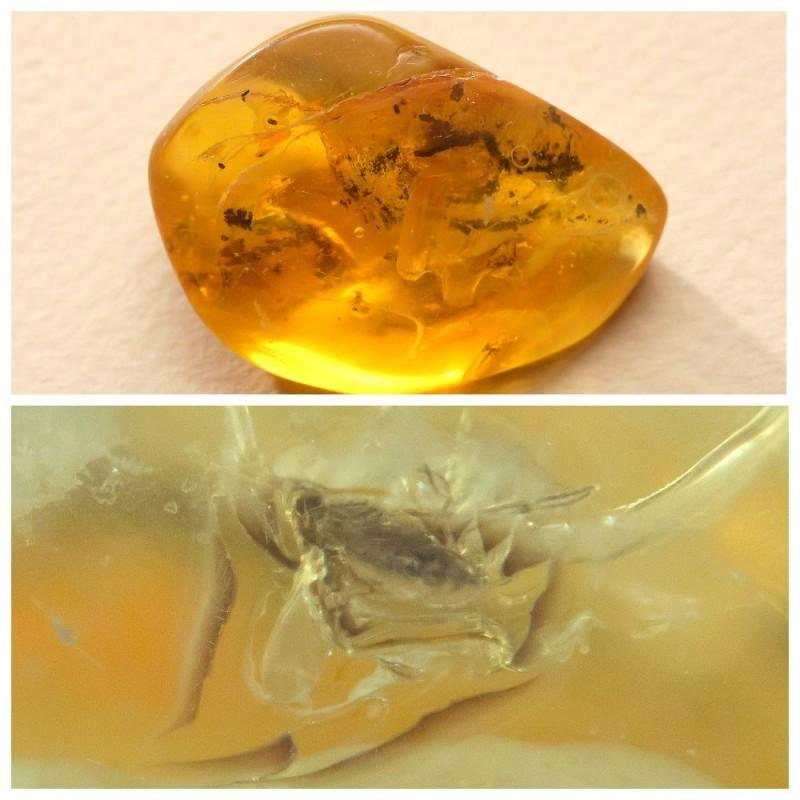 Big natural Baltic amber stone with insect, inclusion