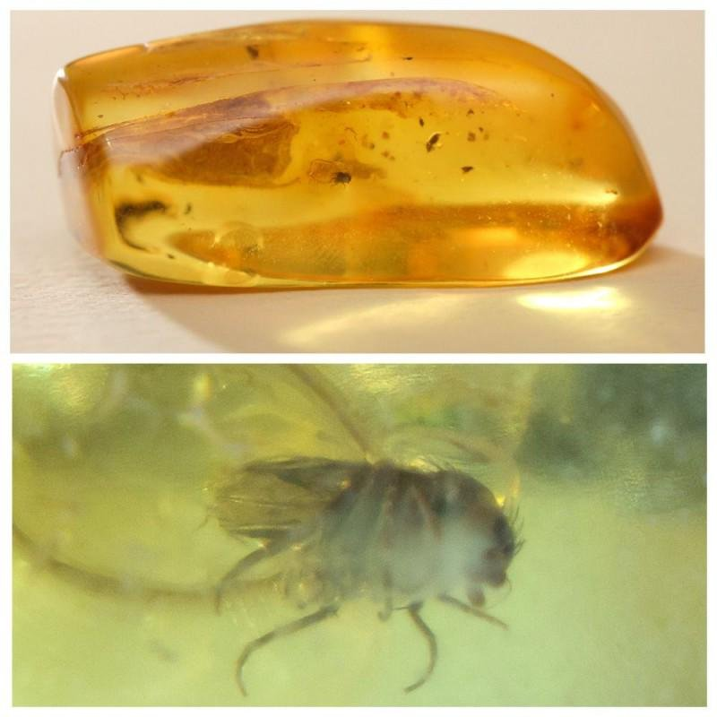 Natural beautiful 100% Baltic amber stone with insect,