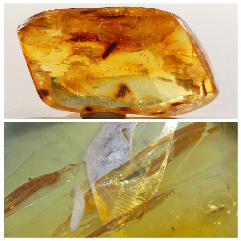 Natural 100% Baltic amber stone with insect, inclusion