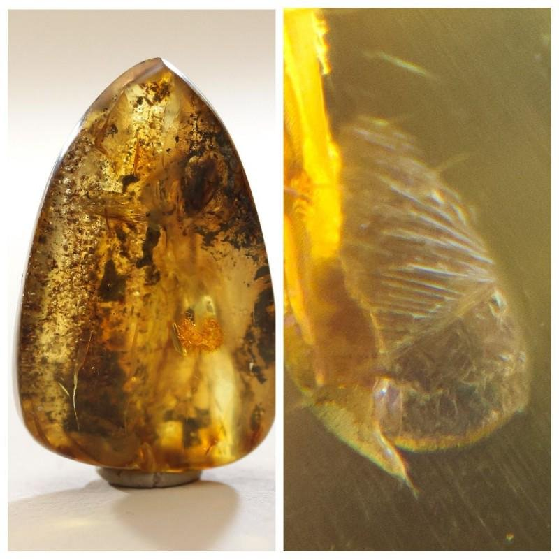 Natural Baltic amber stone with insect, inclusion some