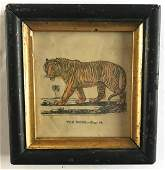 Early 19th C Hand Colored Engraving of a Tiger