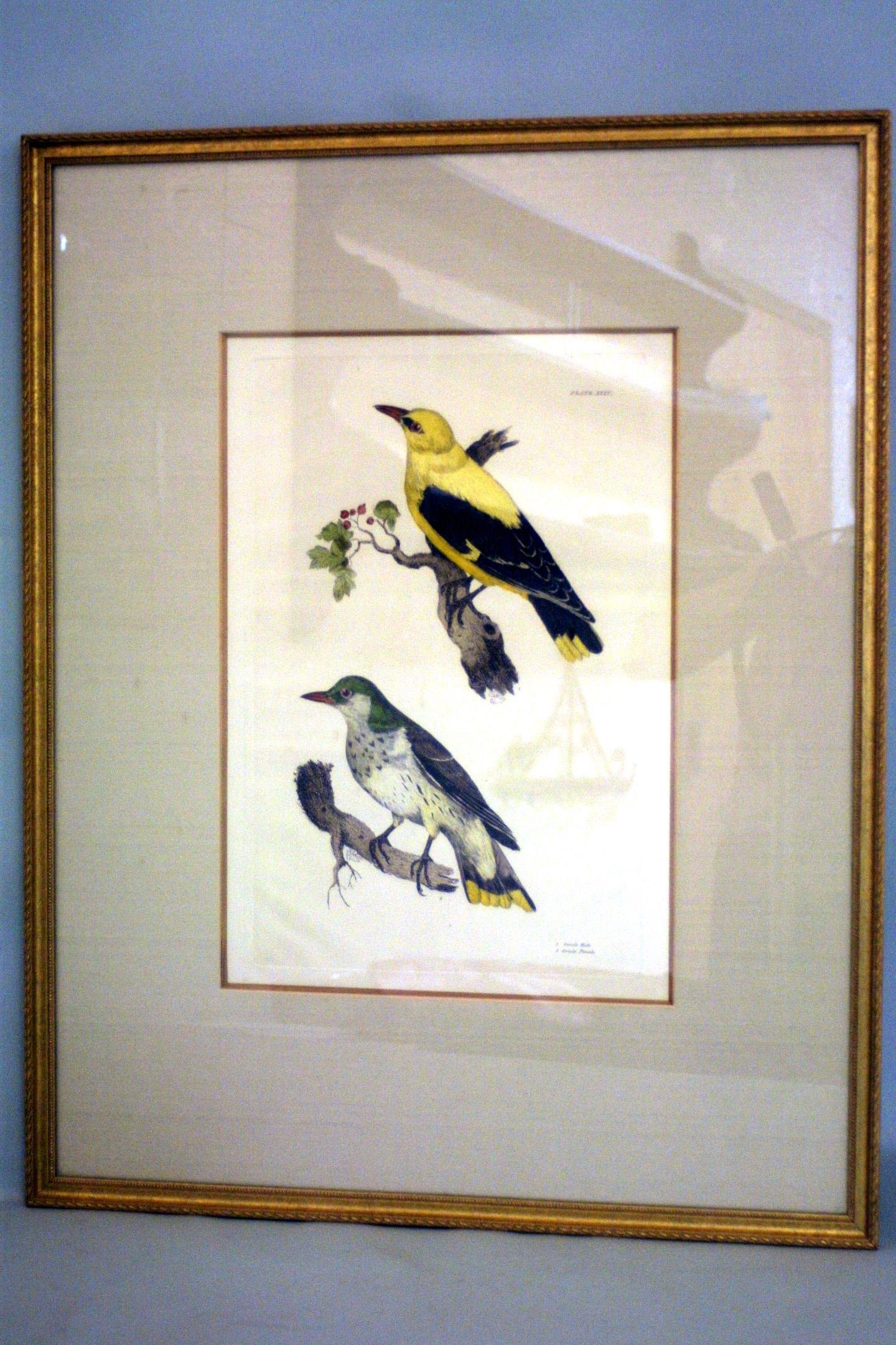 A pair of framed bird prints by Prideaux John Selby