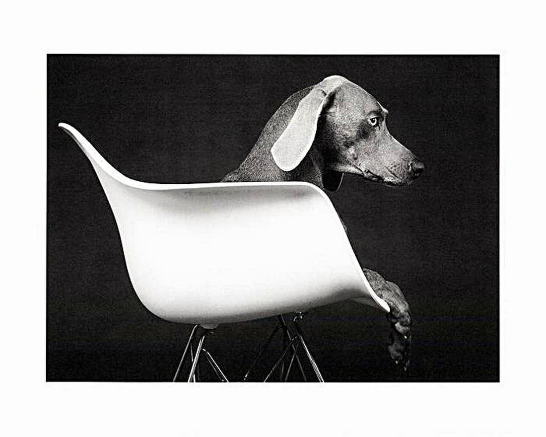 William Wegman: Untitled 2019
