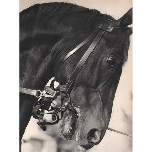 JULIUS ARNFELD Horse