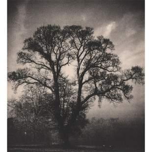 RONIMUND BISSING - Tree