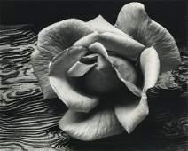 Ansel Adams, Rose and Driftwood, SF, CA 1932