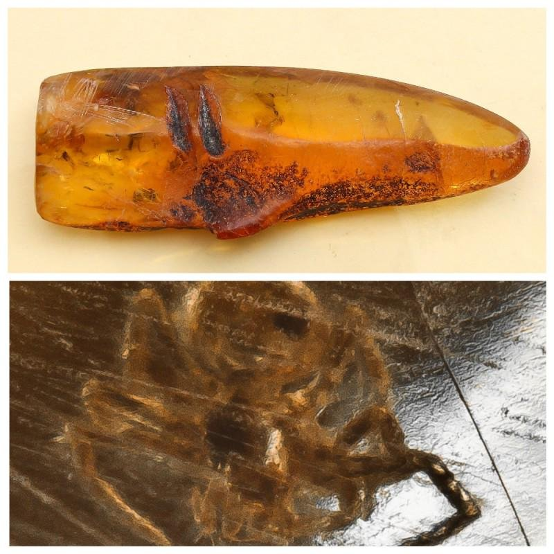 43 g. 100% natural Baltic amber stone fossil with