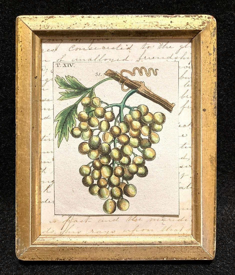 18thc hand colored copperplate engraving of golden