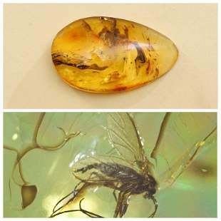 15g Insects in Natural Baltic amber stone 2 inclusions