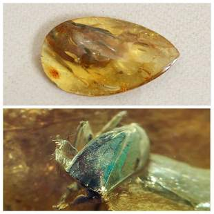 Insects natural Baltic amber beetle stone inclusion