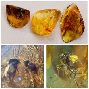 37g inclusions insects natural Baltic amber gemstones
