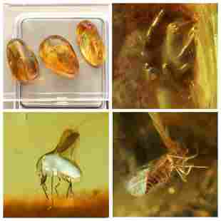 10g Inclusions Baltic amber insects spider Gemstones