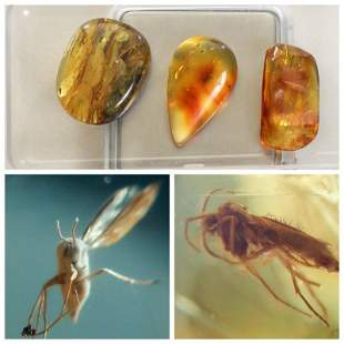 15g Inclusions insects natural Baltic amber, 3
