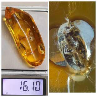 Insect Natural Baltic amber stone inclusion beetle