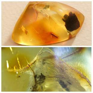 Insect natural Baltic amber stone with inclusion fly