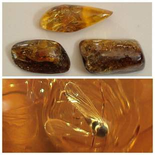 83g Inclusions in natural Baltic amber, spider insects