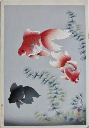 Ohno: Goldfish