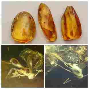 19,4g Baltic amber 3 stones with inclusion flys