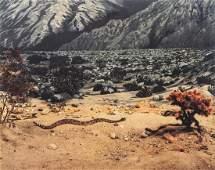 RICHARD MISRACH - Diorama, Palm Springs Desert Museum