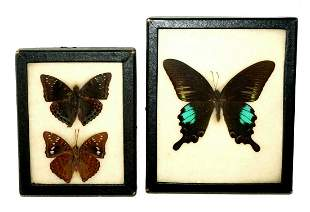 2Pc Vintage English 3x Mounted Butterfly in Cases