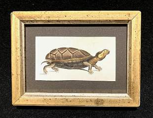 C1810 hand colored turtle engraving