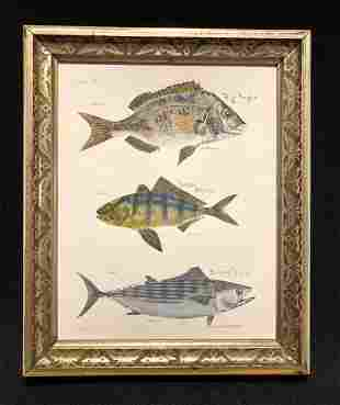 C1840 hand colored fish engraving with hand inked names